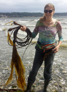 Kelp harvests