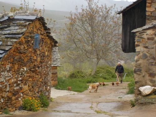 webpozos-herding-chickens