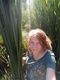 Cattail and me harvest