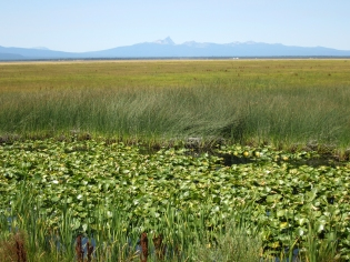 Klamath Marsh- wocas and tule harvesting grounds