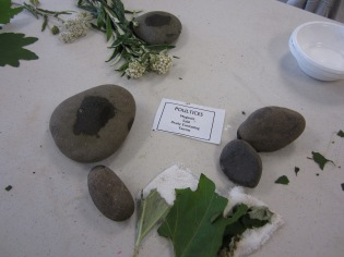 Quileute Tribe Youth Program- Journey Plant Medicines Workshop