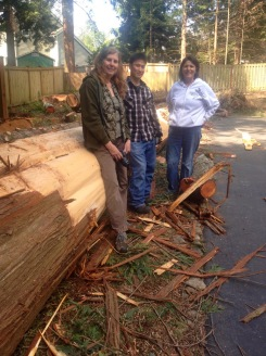 Harvesting cedar bark