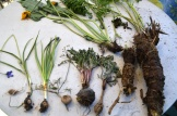 Roots and shoots eastside harvests