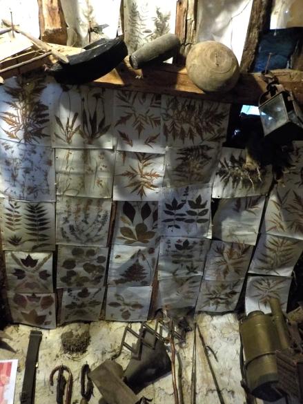 pozos-museum-herbairum-wallpaper