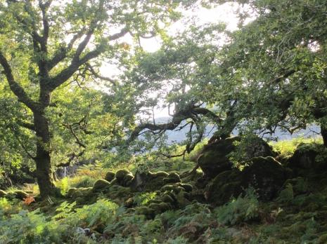 killarney-dogarry-woodland-exc-2-med