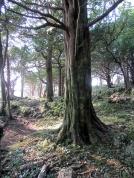 yew-grove-2