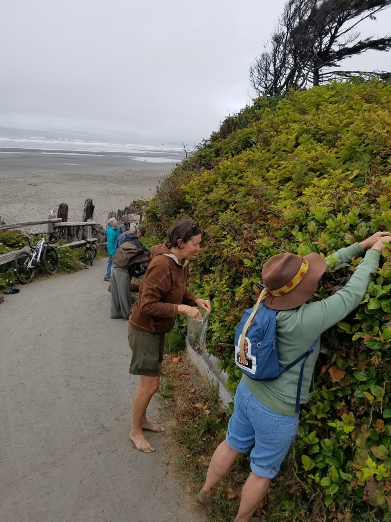 Expedition harvest at the beach