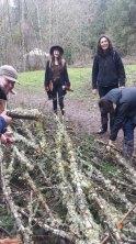 Alder wood harvest