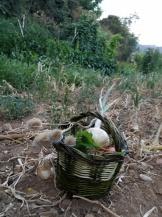 webBasket for harvests 2