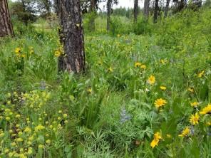 Eastside meadow
