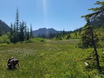 Alpine Meadow exploration