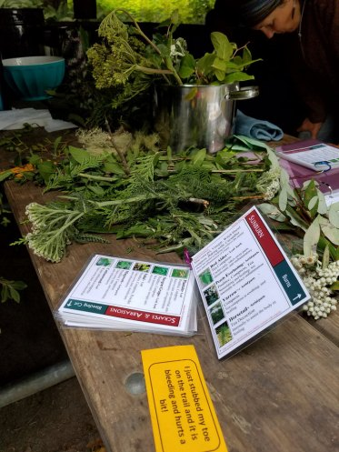 Expedition Journy plant medicines