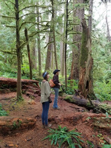 Old growth forest exploration