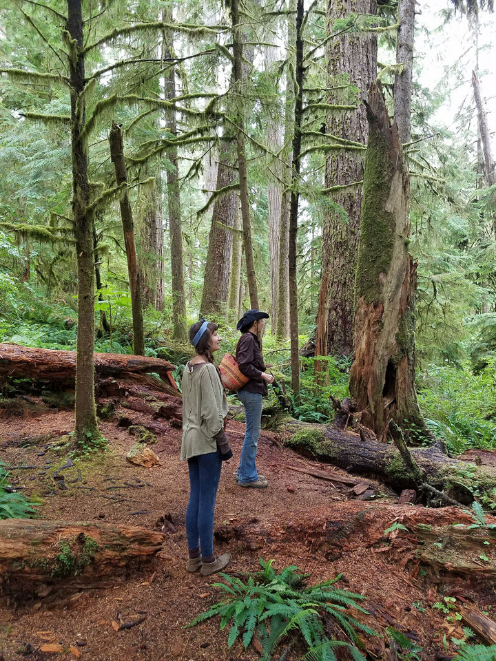 webExpedition old growth walk