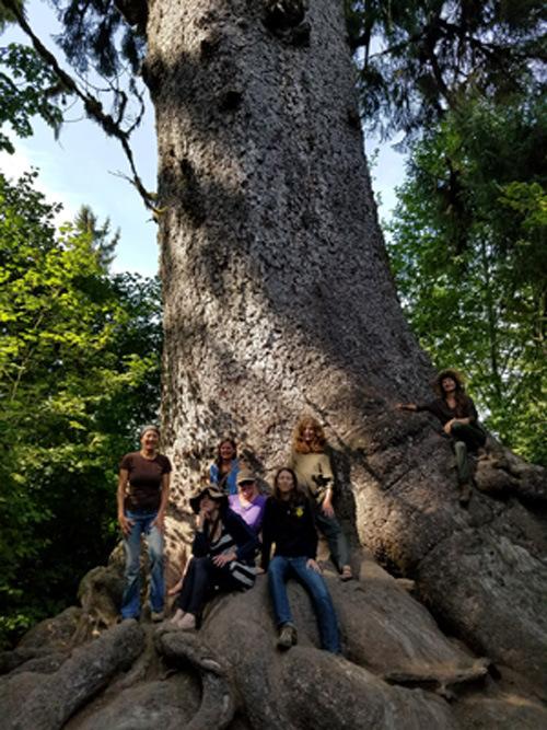 webExpedition Spruce treeweb