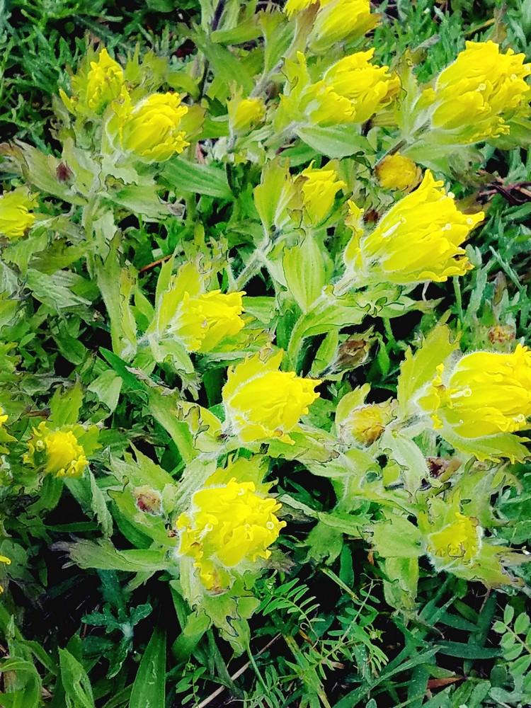 webgoldenpaintbrush