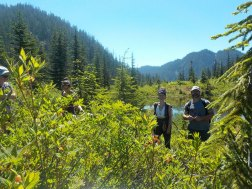 Alpine exploration 3