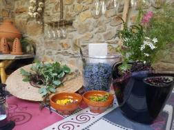 webPlants herbal harvest pozos