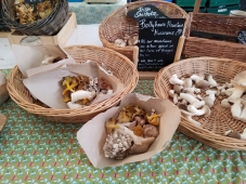 Farmers market mushrooms