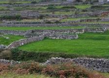 Innisheer stone walls