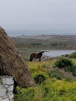 Innisheer views thatch and piebald