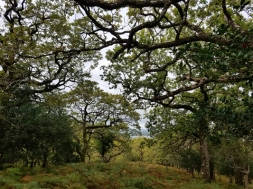 Canopy of the Oldwood