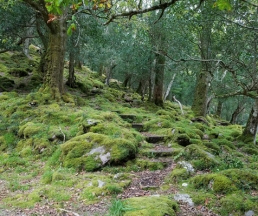 Magical trail into ancient oakwood
