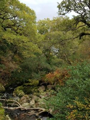 Oldwood and stream