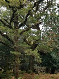 Amazing trees of the oldwood
