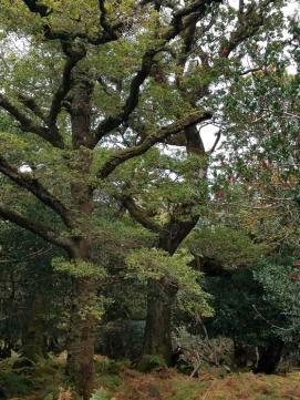 Amazing trees of the oldwood