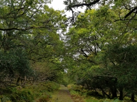 Trail through the Oldwood