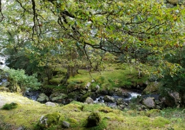 Fairy woodland in the Oldwood