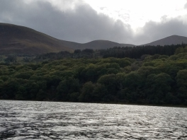 Oldwood from the water