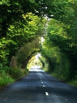 Tree tunnels everywhere
