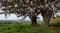 Tara Hawthorns with ribbons