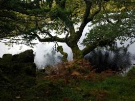 Oldwood oak and lake