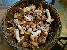 Wild mushrooms for soup