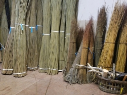 Willow in workshop