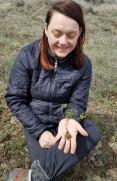 4 Sagebrush lomatium harvestweb
