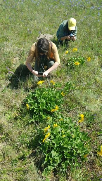 5 Botanizing prairieweb