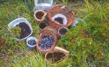 7 berry harvest web - Copy