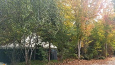Scholars garden yurt fall exc web