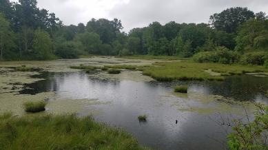 5 Nisqually river delta