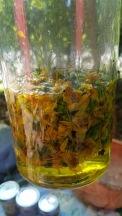 6 Arnica oil