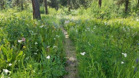 6 Camas meadow 2