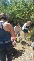 6 milkweed ID