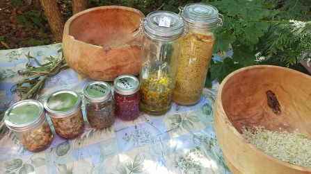 6 Plant medicines