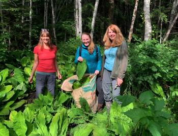 7 harvesting swamp lantern x April