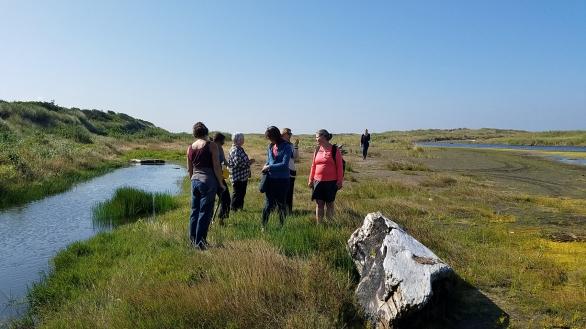 9 Estuary plant walk