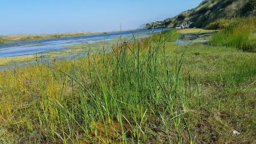 9 Estuary plants